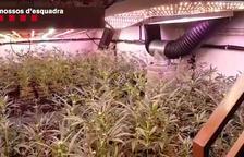 Desarticulado un clan que se dedicaba a producir marihuana a gran escala