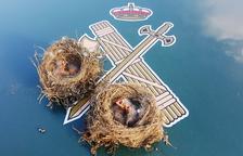 Denunciados dos vecinos de Tortosa por recoger dos nidos de pájaro con crías