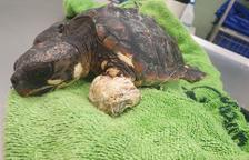 Troben una tortuga marina a la Platja de Sant Salvador