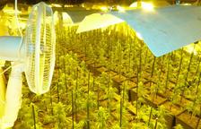 Els Mossos detenen dos homes i desmantellen una plantació de 1293 plantes de marihuana a Prades