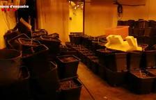 Los investigadores localizaron en una habitación escondida al parking 50kg de ovillos de marihuana prensados al vacío.