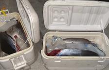 La Guàrdia Civil confisca 120 quilos de tonyina roja a un pescador recreatiu a l'Hospitalet de l'Infant