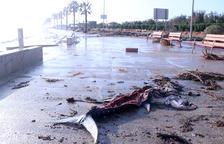 Ultiman las indemnizaciones para compensar a los pescadores por los daños causados por los atunes muertos