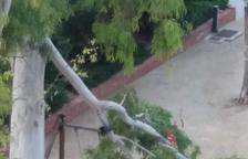 Una branca de grans dimensions cau sobre un gronxador al carrer Pompeu Fabra de Tarragona