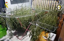 Desmantelado un grupo que cultivaba marihuana en Reus, Castellvell y El Catllar