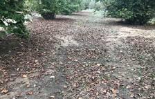 Unió de Pagesos denuncia el incremento de robos de avellana y algarroba en el Camp de Tarragona