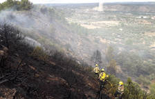 Queman 8.000 metros cuadrados de massa forestal y olivos en Ascó