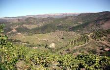 El Priorat demana la declaració urgent del Parc Natural de les Muntanyes de Prades