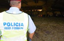Denuncian una explotación ganadera en Xerta por las malas condiciones en que se encontraban los corderos