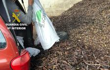 Intercepten un veí de Reus amb 420 quilos de garrofes sostrets a una finca del Perelló
