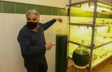 El INS de Horticultura crea un sistema que reduce el CO2 a través de algas