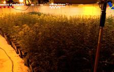 S'hanintervingut més de 4.000 plantes.