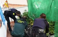 Desmantelada una plantación de marihuana en una terraza de una vivienda en Alcover