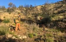 Fundación Repsol impulsa la reforestació d'una finca de Flix afectada per l'incendi de 2019