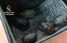 Imagen de algunas tortugas intervenidas.