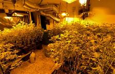 Desarticulat un grup criminal especialitzat en el cultiu de marihuana que operava desde Cunit