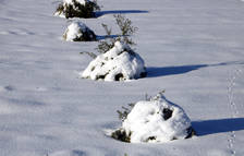 Los campesinos alertan de que si se intensifica el frío los daños en los olivos serán similares al 2001