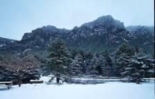 Imagen de Caro nevado.