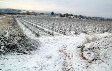 Viticultors tarragonins asseguren que la nevada serà beneficiosa per la vinya