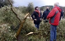 Agricultura estima que el temporal Filomena ha afectat unes 46.000 hectàrees d'oliveres