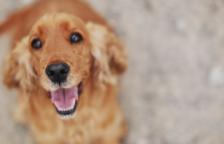 Un gos de Seül, positiu en coronavirus