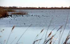 Vista general d'aus a la zona de la llacuna de l'Encanyissada, al Parc Natural del Delta de l'Ebre.