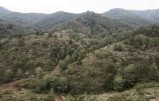 Agricultura hace actuaciones para prevenir incendios en la sierra de Tivissa