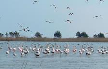El Delta, en el top 100 de los destinos verdes