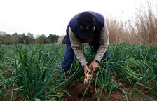 La agroalimentación permite en la demarcación de Tarragona superar el 2020 mejor de lo previsto