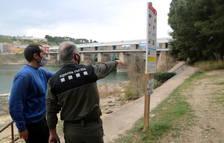 Proponen crear pasos de fauna en el Ebro en los tramos donde mueren nutrias atropelladas