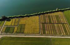 Imagen aérea de los campos experimentales del Delta Organic Rice en el Delta del Ebro donde se testea el cultivo de arroz ecológico.