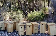 El Port de Tarragona instal·la caixes nius per controlar la processionària a Cap Salou