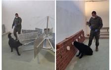 Soco, el gos de l'Exèrcit que detecta la covid amb l'olfacte