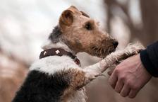 Els gossos podrien estar darrere de l'origen de la variant britànica, segons un estudi