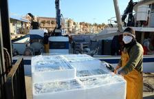Les captures de peix blau a Tarragona, sota mínims: «Les tonyines s'ho mengen tot»