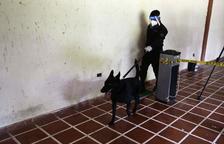 Gossos policia per detectar positius de coronavirus