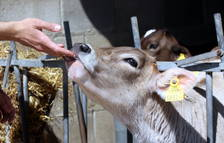 La resistència als antibiòtics es pot transmetre dels animals a les persones, segons un estudi
