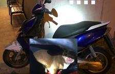 Imatge de la moto i l'animal que ha compartit la policia a arxes.