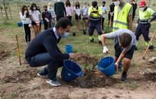 200 estudiantes participan en la segunda plantación en la Granja dels Frares del Morell