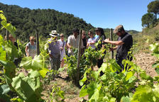 La DO Tarragona ultima la creació d'una ruta per potenciar els seus vins i l'enoturisme