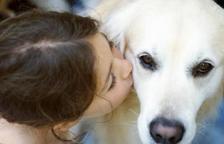 Un nou coronavirus pot estar contagiant-se de gossos a humans