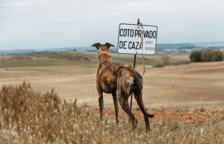 Rescatan 18 perros en muy mal estado de una finca de Batea