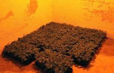 Mossos y Guardia Municipal de Riudoms detienen dos hombres y desmantelan una plantación de marihuana