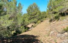 Detingut un home pel cultiu d'una nova plantació de marihuana a Querol