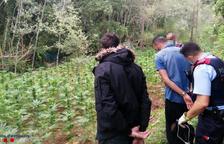 Els Mossos localitzen una  plantació de 2.781 plantes de marihuana al mig del bosc a Vila-rodona
