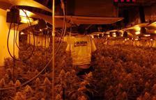 Desmantelado en La Sènia un cultivo 'indoor' de 4.000 plantas de marihuana