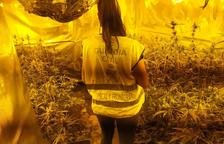 La Guardia Civil desmantela una plantación de marihuana en Riudoms