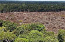 Alerta en el pulmón verde del planeta: algunas zonas del Amazonas emiten más carbono del que absorben