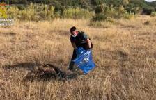 Rescatan un buitre leonado que había quedado atrapado en una valla del camping de la Pobla de Massaluca