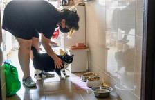 Cuidar las mascotas de otros, un trabajo al alza